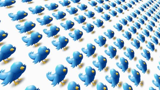 oiseaux bleus réseaux sociaux, social média